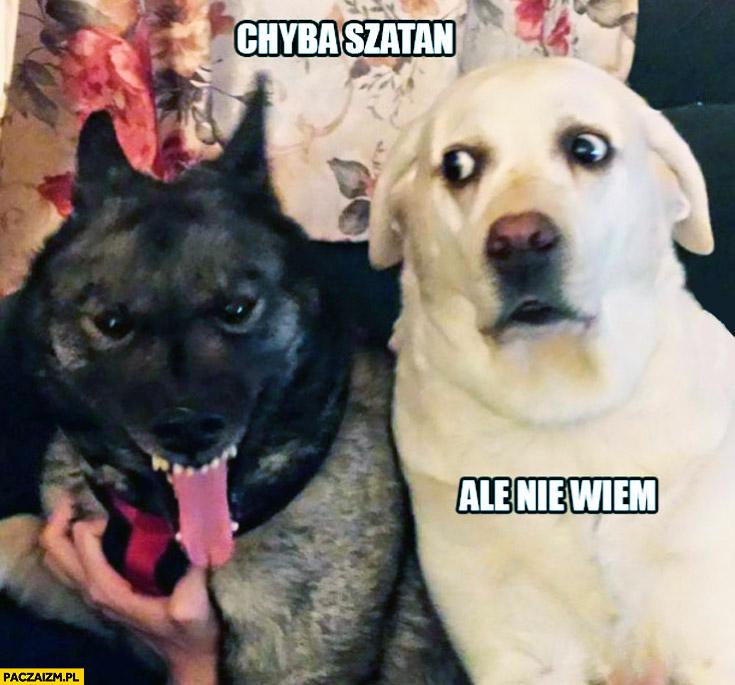 chyba-szatan-ale-nie-wiem-pies-psy