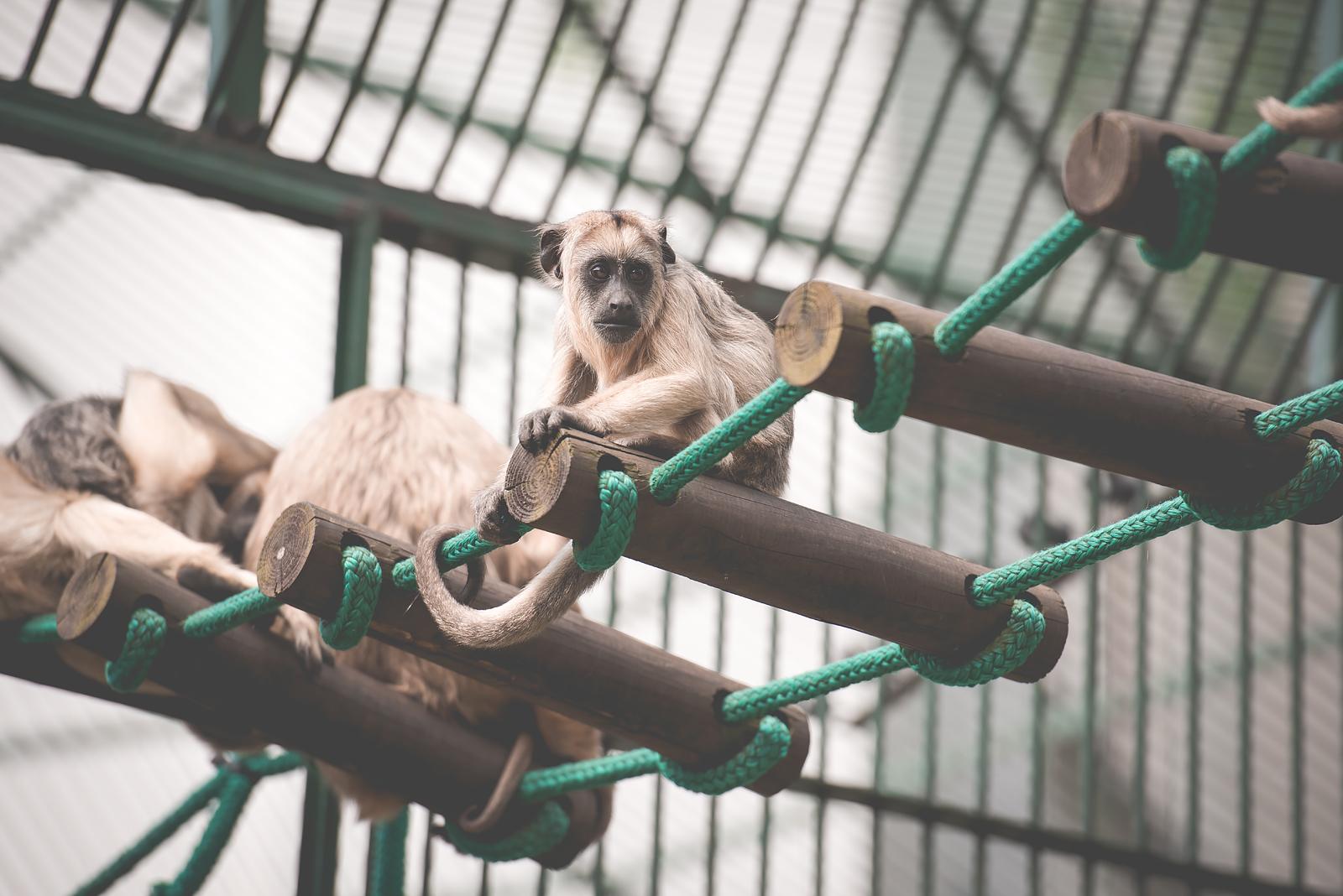 malpki we wroclawskim zoo