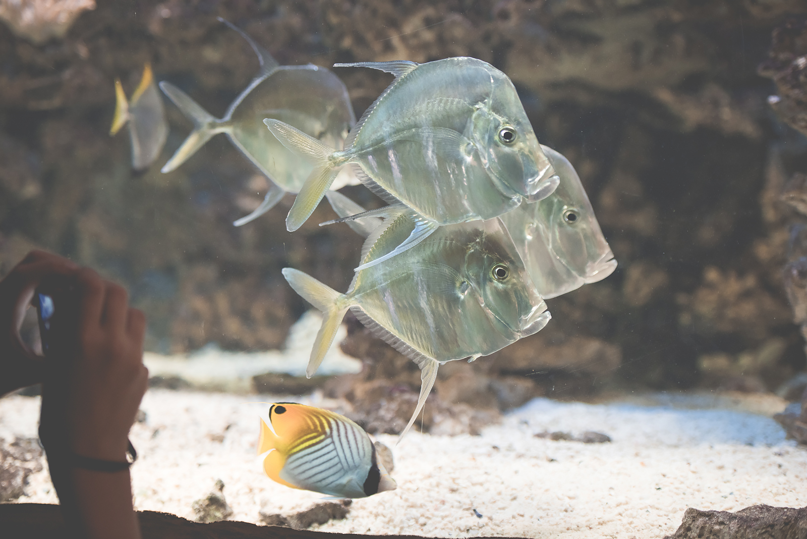 rybki kwarium