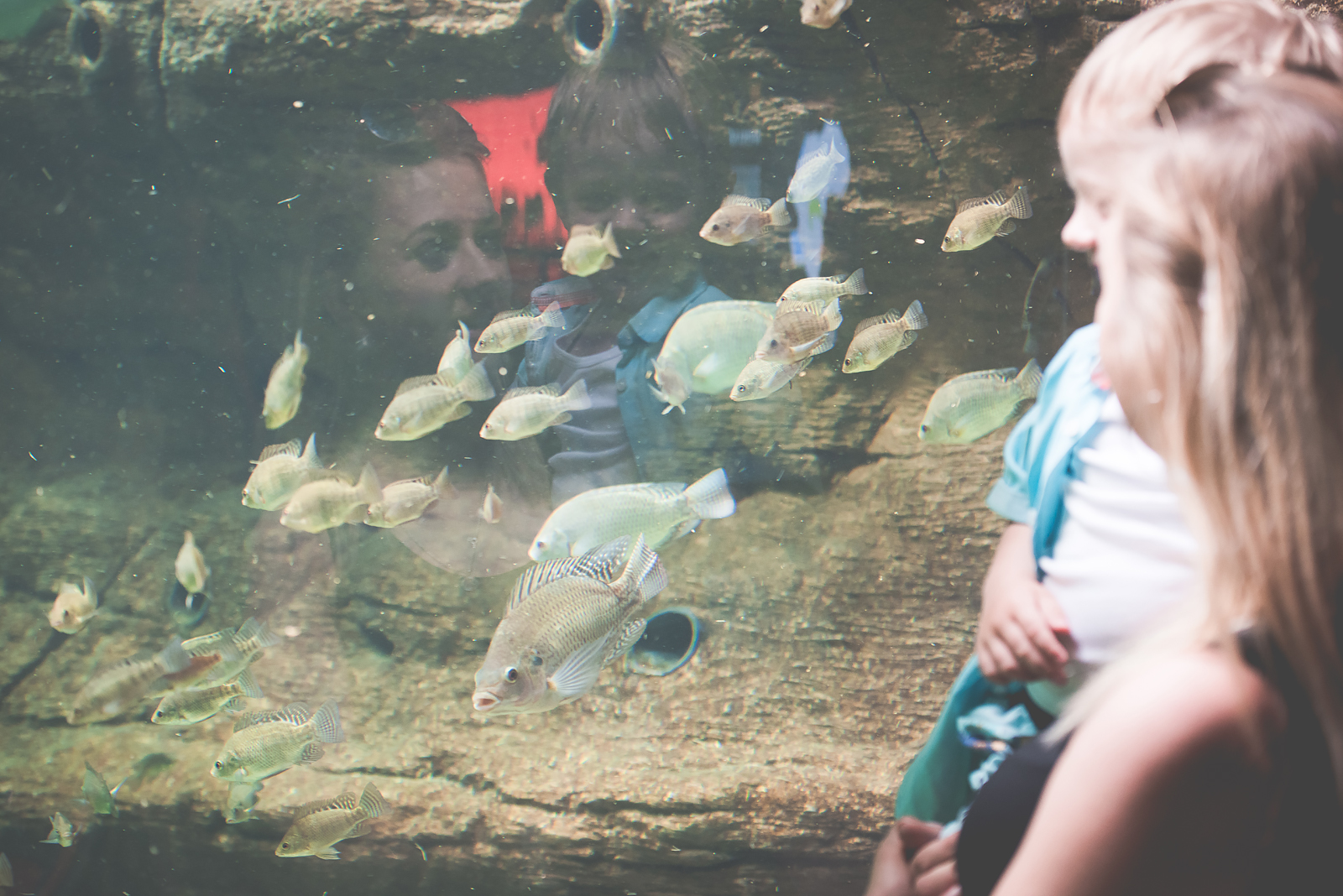 rybki w oceanarium
