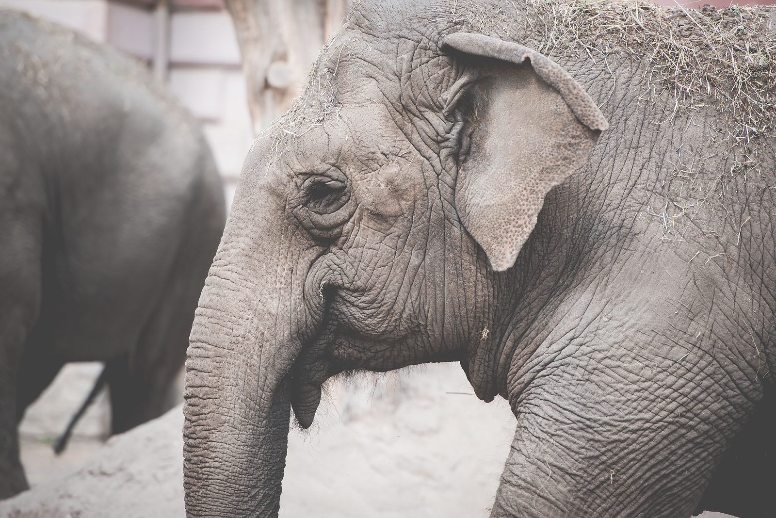 slon wroclaw zoo