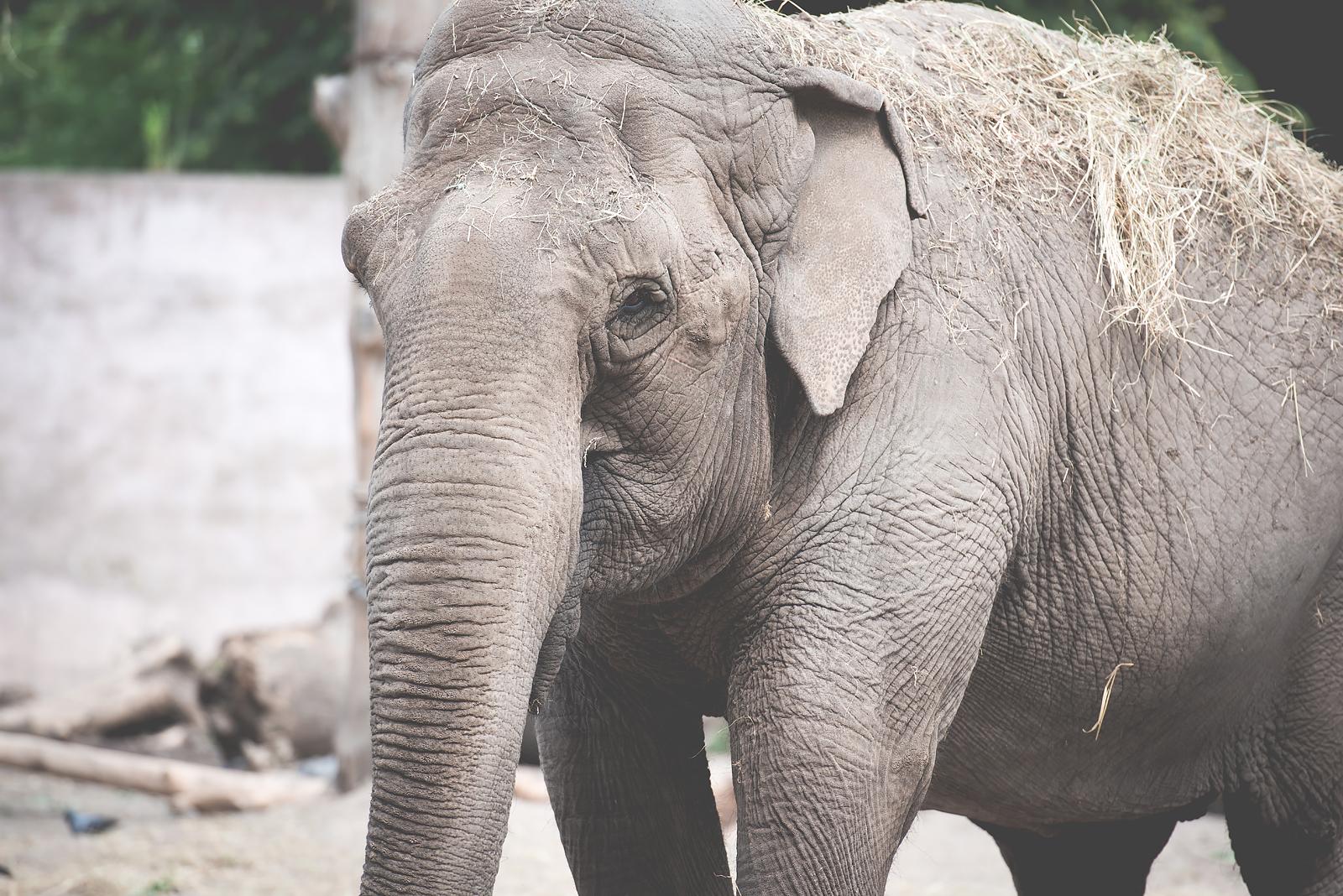 wroclaw zoo slon