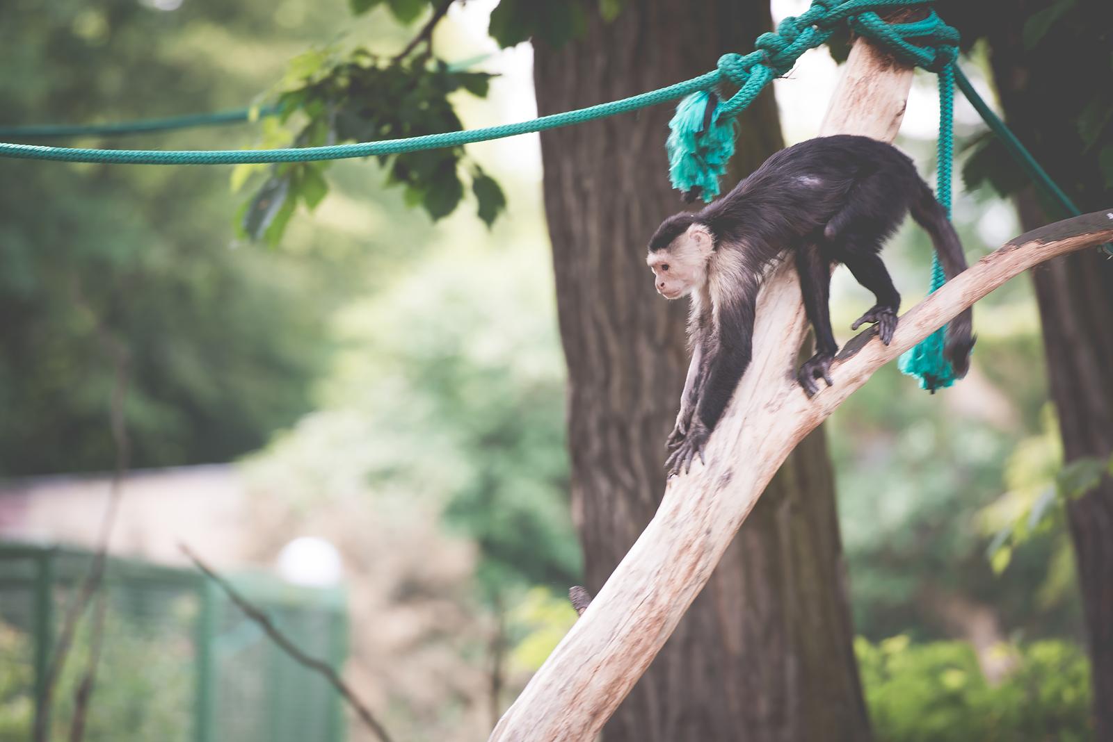 zoo we wroclawiu