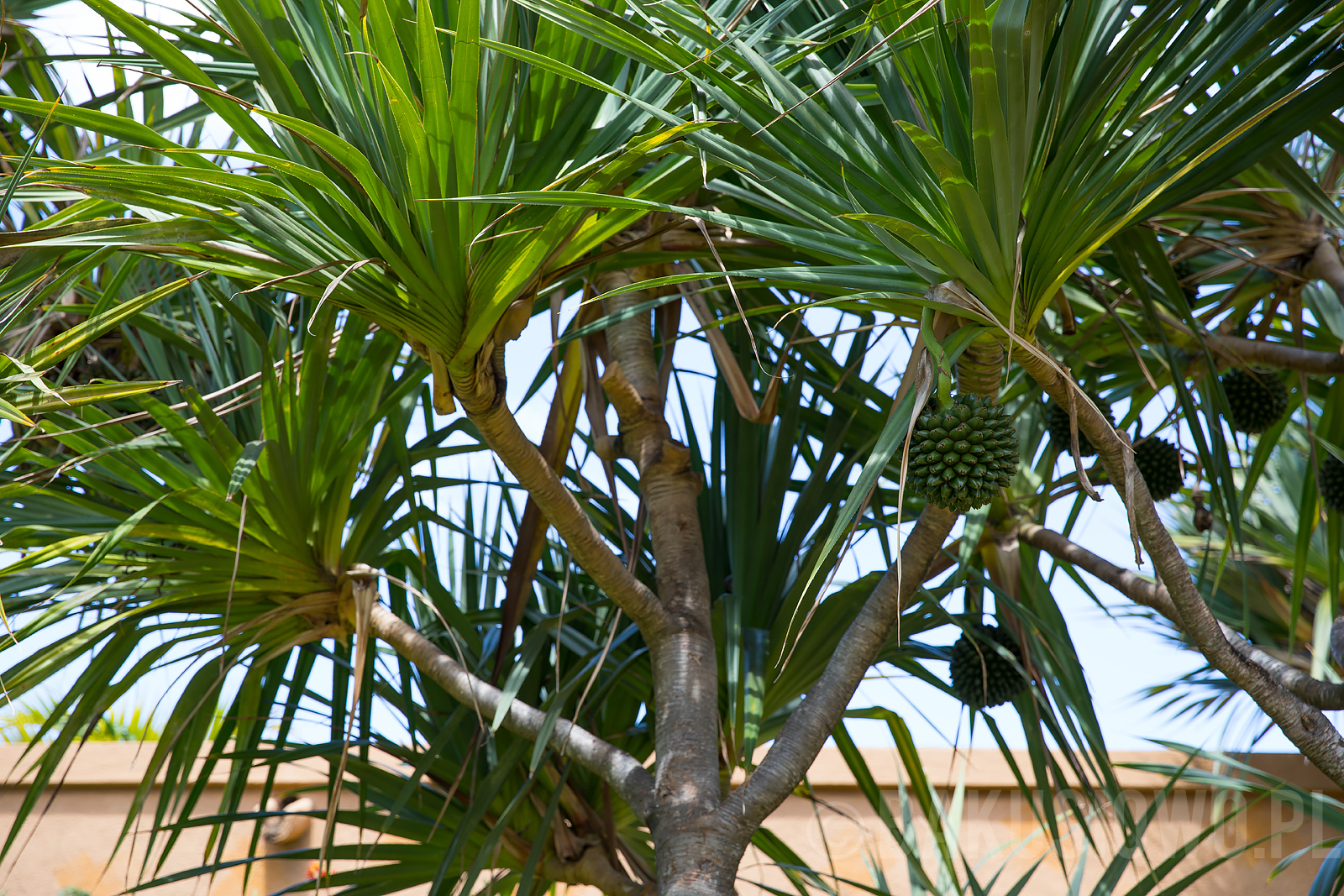 mauritius-le-meridien-photos-107