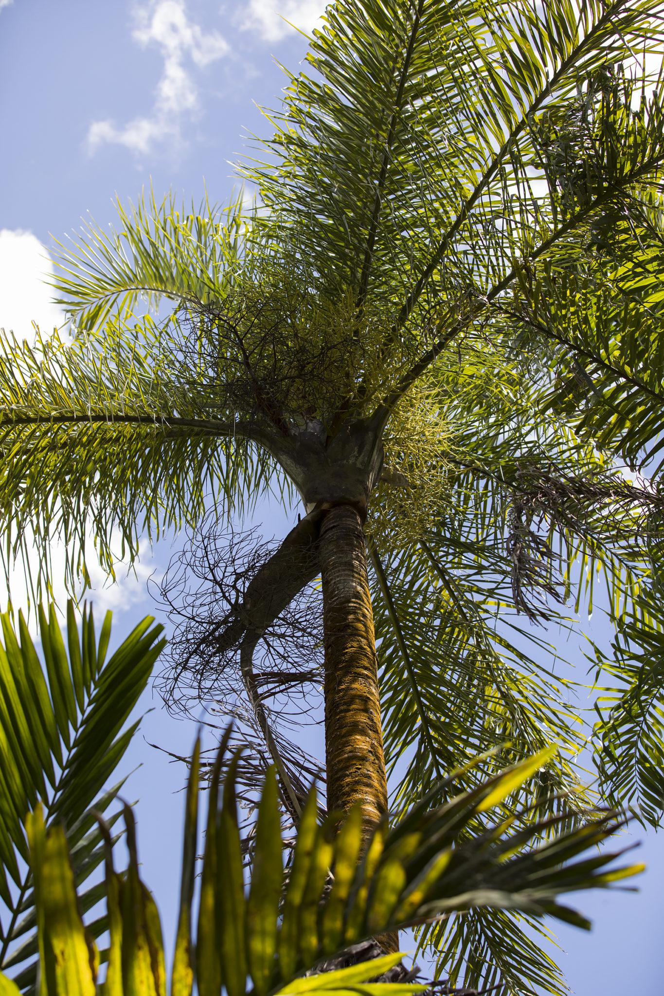 Mauritius Opinie Blog 100