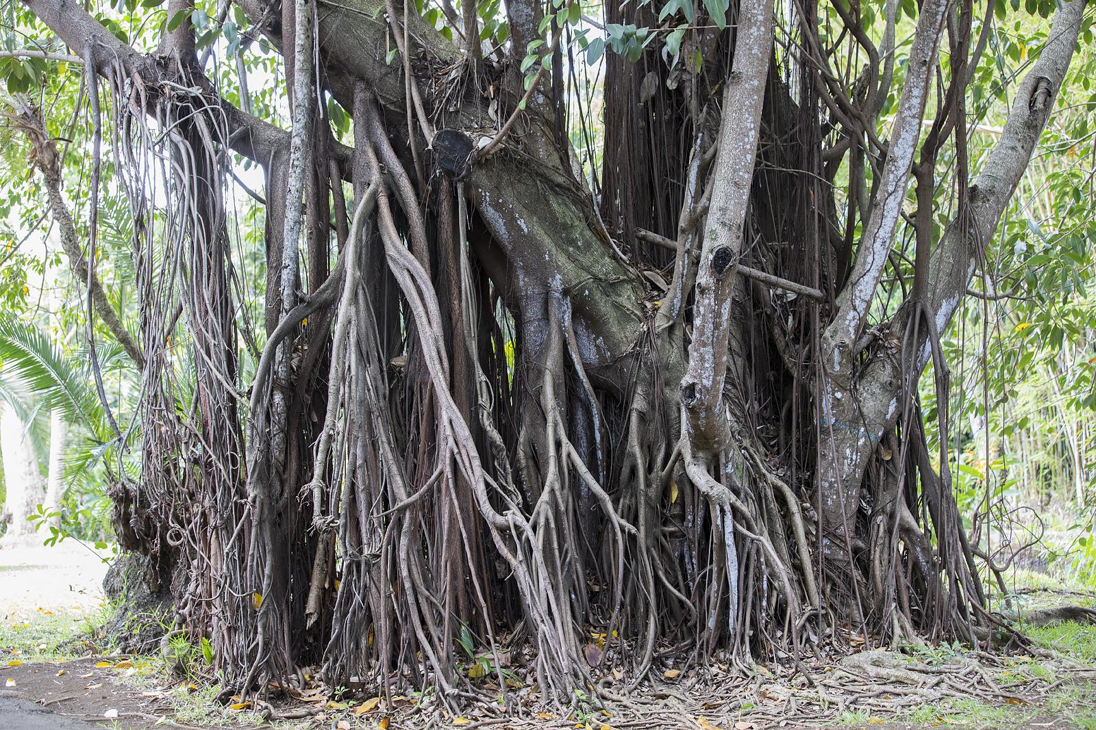 Mauritius Opinie Blog 105