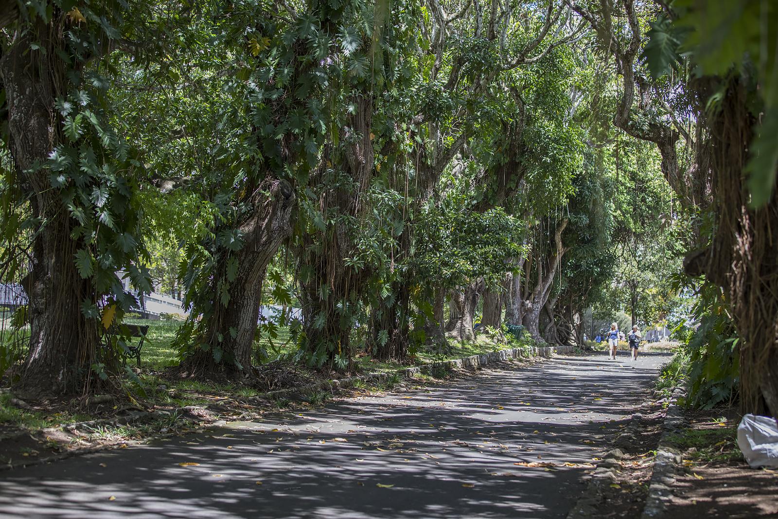 Mauritius Opinie Blog 107
