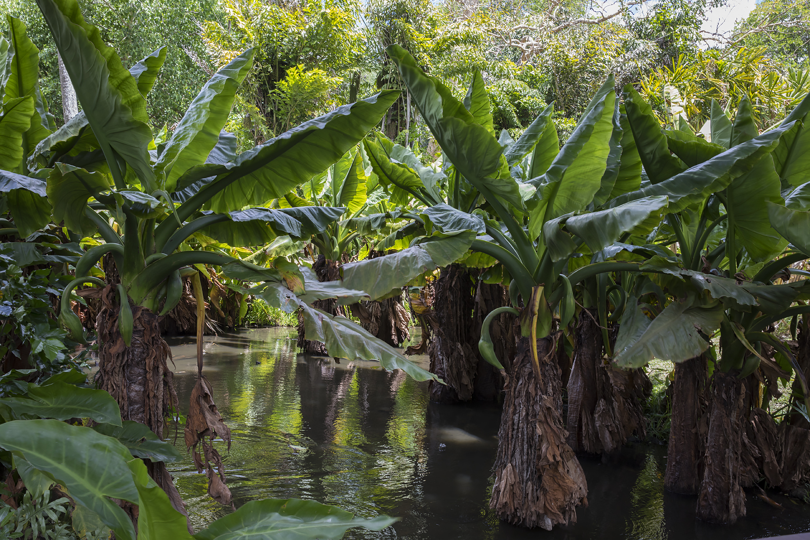Mauritius Opinie Blog 79