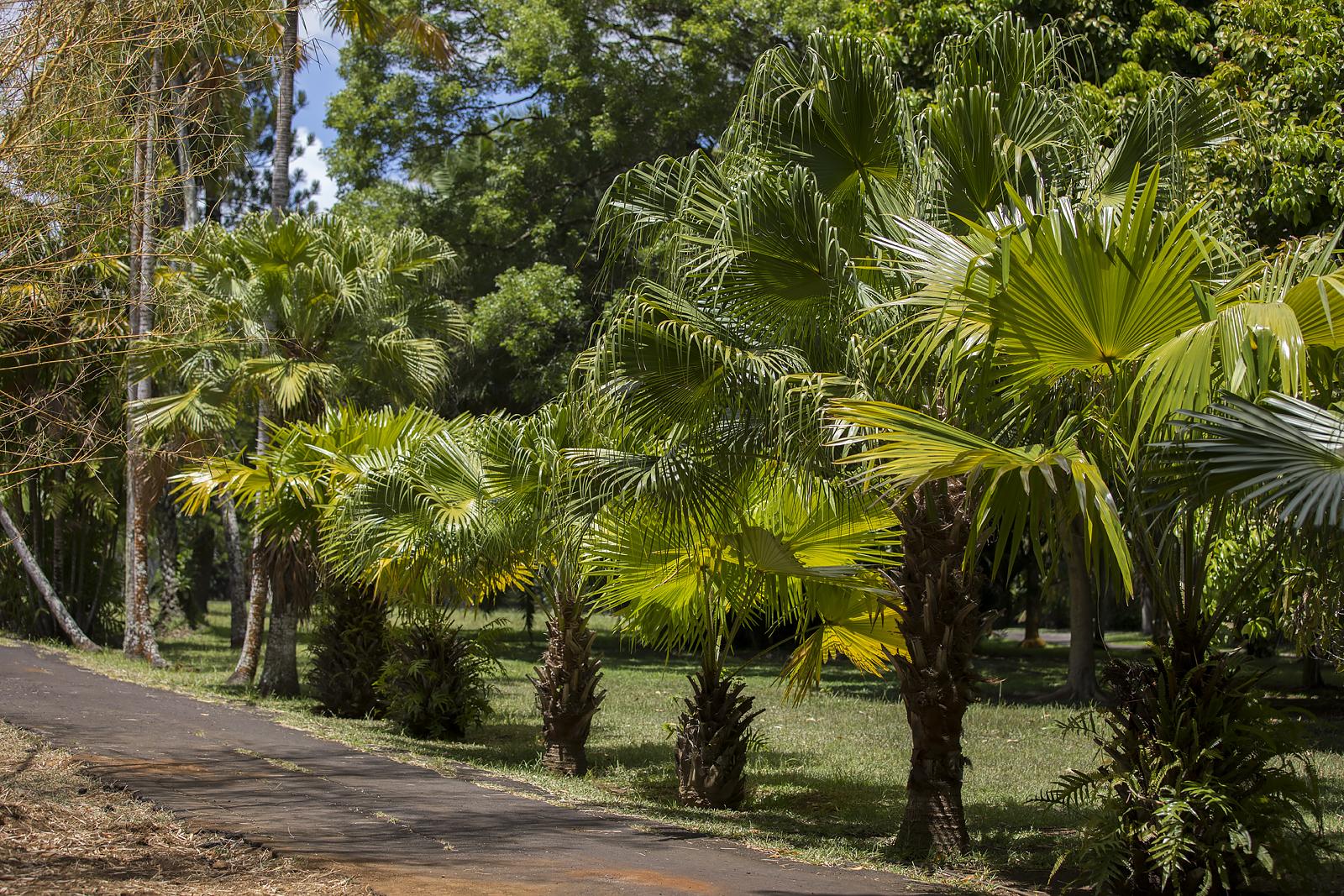 Mauritius Opinie Blog 93