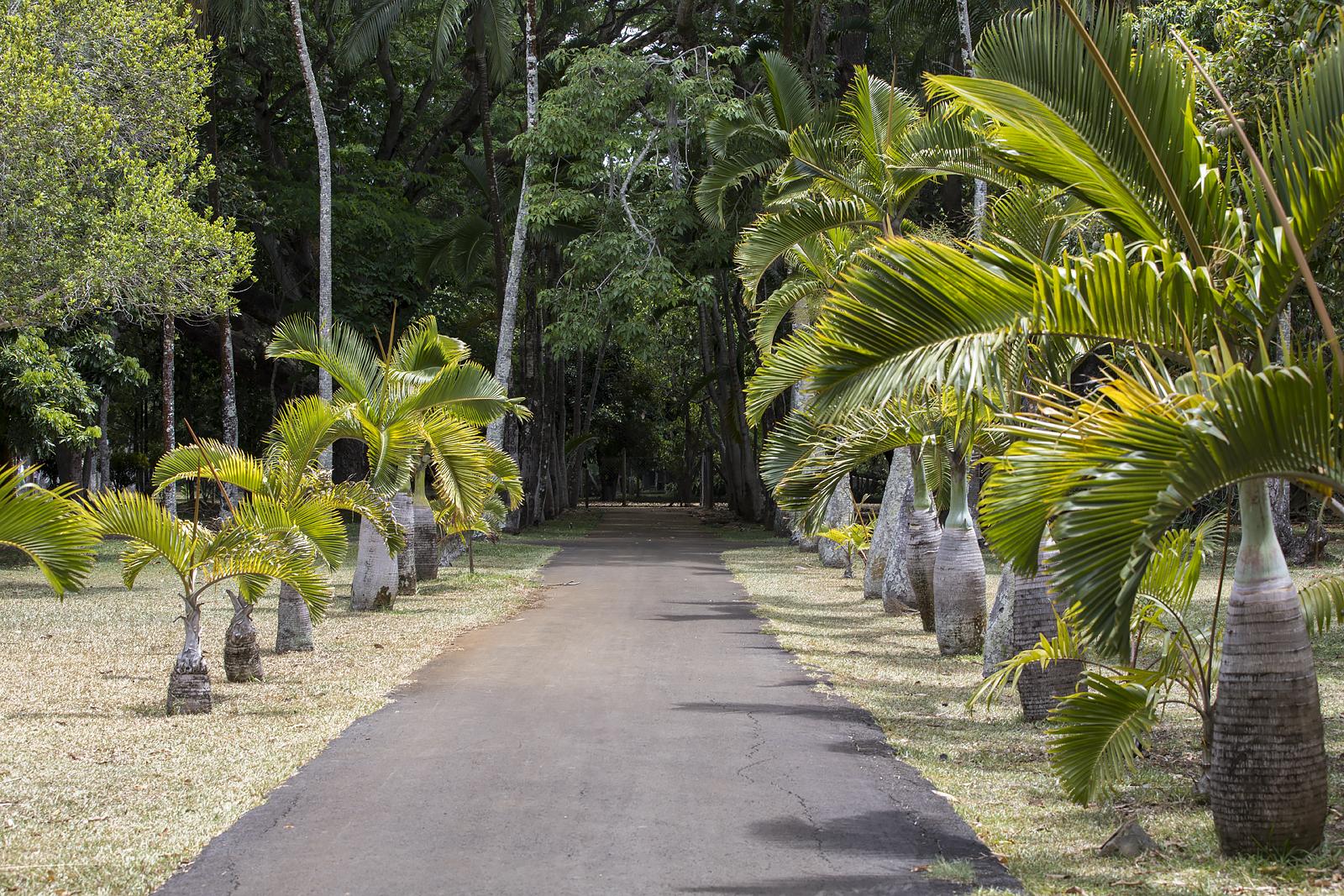 Mauritius Opinie Blog 94