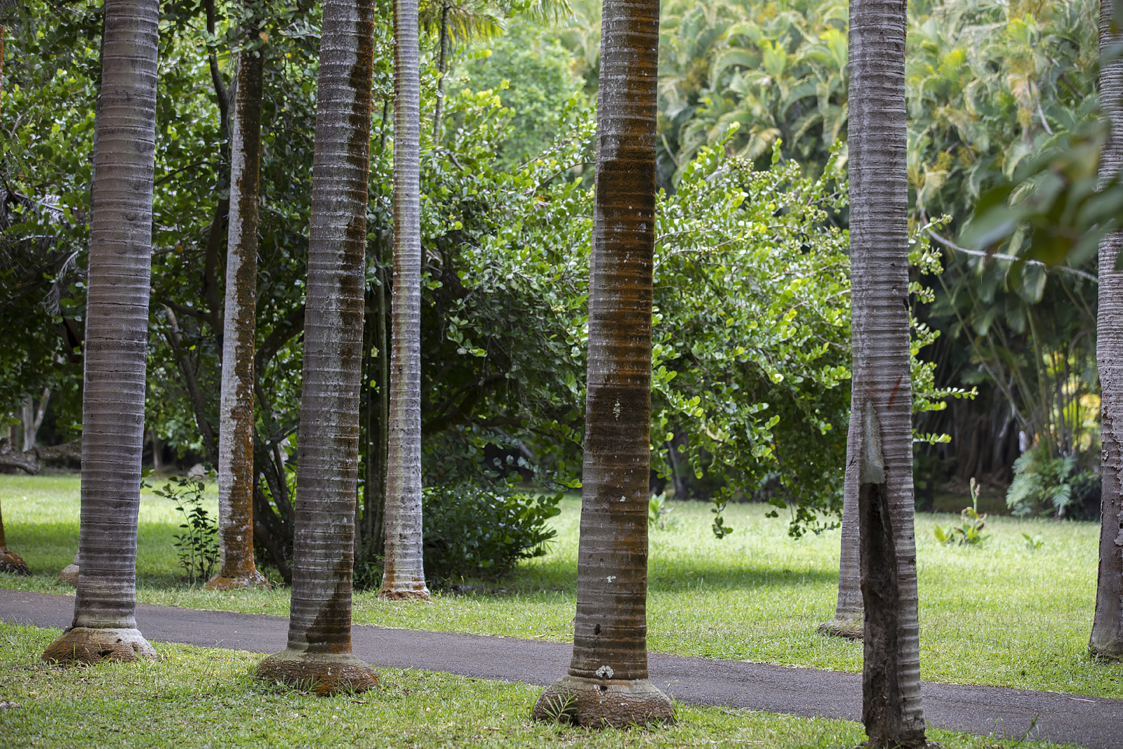 Mauritius Opinie Blog 95
